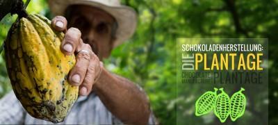 Schokoladenherstellung: Die Plantage